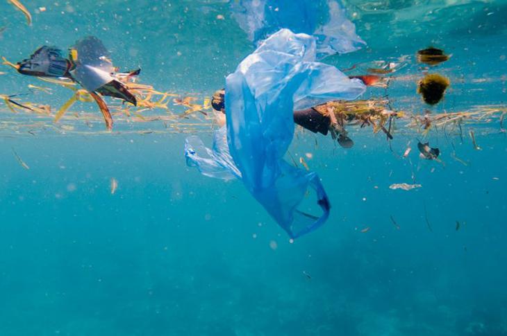 Mikroplastikler Otizme Neden Oluyor