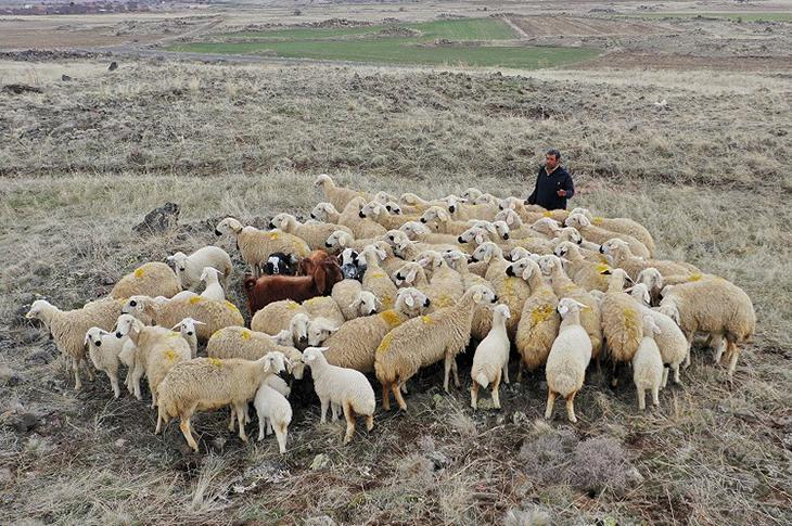 Engelli Çoban Hibe Desteğiyle Sürü Sahibi Oldu