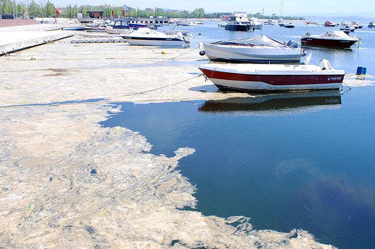 Deniz Kirliliği Bulaşıcı Hastalıklara Yol Açabilir